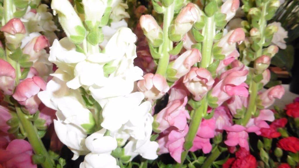 Blumen Vu